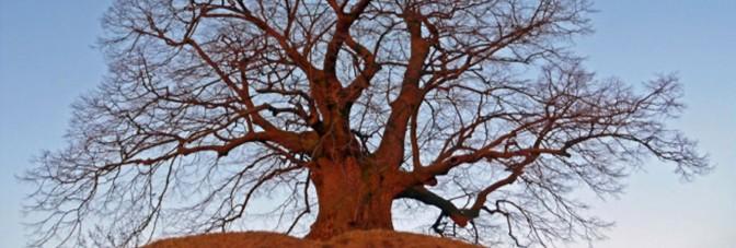 18. August – Zu Besuch bei alten Bäumen auf dem Kunsthandwerkerhof Thomsdorf